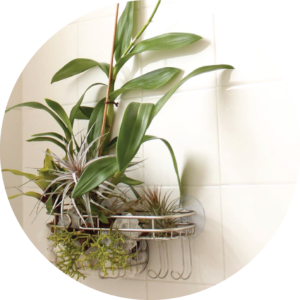 indoor-garden-with-shower-caddies